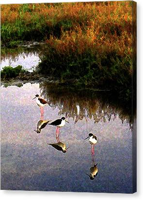 Canvas Print featuring the digital art Black-necked Stilts by Timothy Bulone