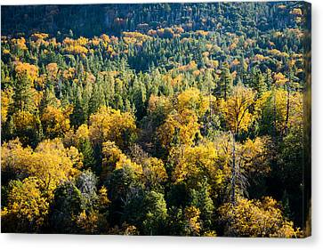 Black Oaks Turning Canvas Print by Alexander Kunz