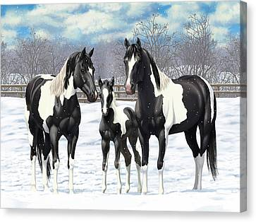 Black Paint Horses In Winter Pasture Canvas Print by Crista Forest