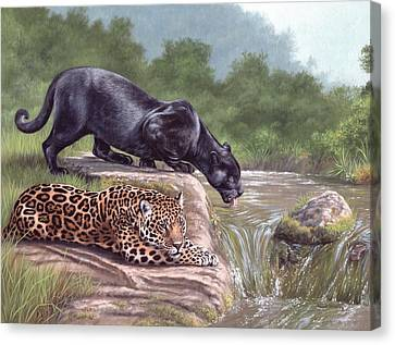 Black Panther And Jaguar Canvas Print by Rachel Stribbling