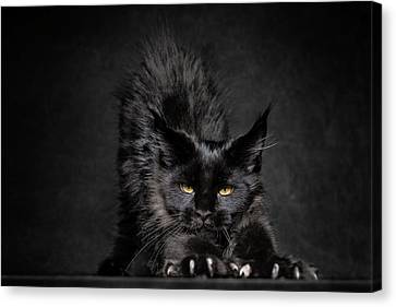 Canvas Print featuring the photograph Black Panther by Robert Sijka