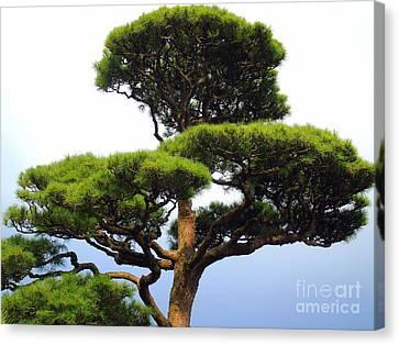Black Pine Japan Canvas Print by Susan Lafleur