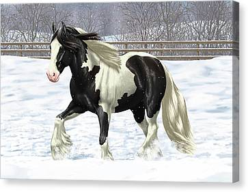 Black Pinto Gypsy Vanner In Snow Canvas Print by Crista Forest