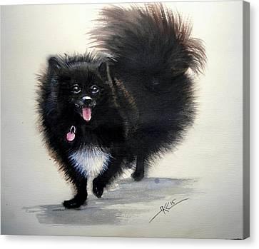 Black Pomeranian Dog 3 Canvas Print