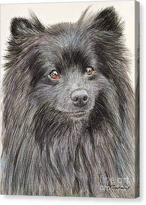 Black Pomeranian Painting Canvas Print
