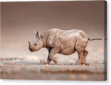 Black Rhinoceros Baby Running Canvas Print by Johan Swanepoel
