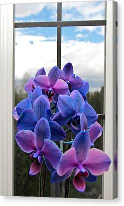 Canvas Print featuring the photograph Black Sapphire Orchids  by Aaron Berg
