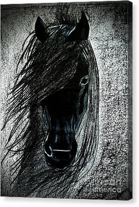 Black Stallion Portrait Canvas Print