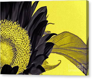 Black Sunflower Canvas Print