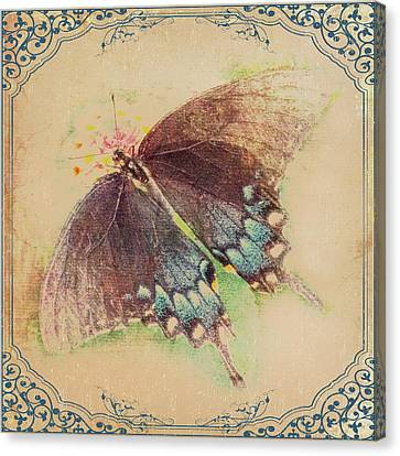 Black Swallowtail Butterfly Framed  Canvas Print