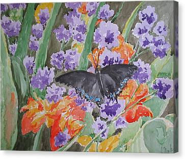 Black Swallowtail Butterfly On Canna Lilies Canvas Print by Becky Noble