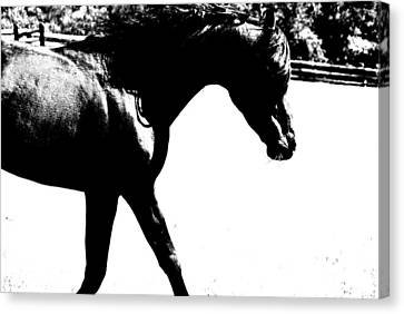 Black Trot Canvas Print by Emily Stauring