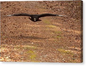 Canvas Print featuring the digital art Black Vulture In Flight by Chris Flees