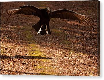 Canvas Print featuring the digital art Black Vulture Landing by Chris Flees