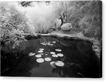 Black Water Pond Canvas Print by John Gusky