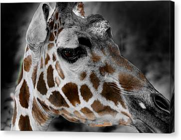 Black  White And Color Giraffe Canvas Print by Anthony Jones