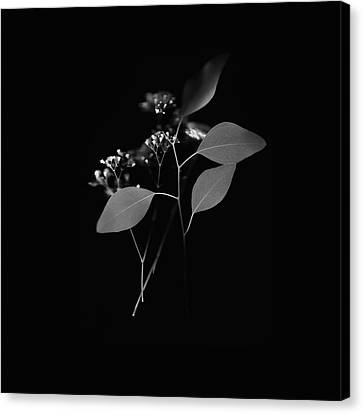 Floating Black And White Canvas Print