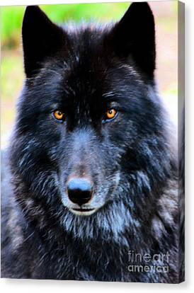 Black Wolf Canvas Print