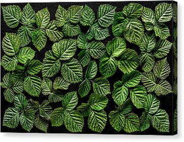 Blackberry Leaf Canvas Print by Edgar Laureano