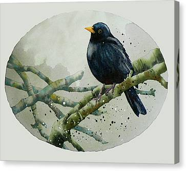 Blackbird Painting Canvas Print by Alison Fennell