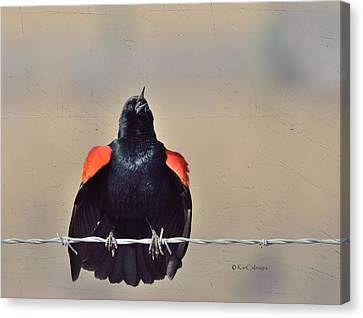 Canvas Print featuring the photograph Blackbird Singing by Kae Cheatham