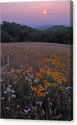 Blackeyed Susan Sunset Canvas Print by Alan Lenk