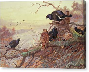 Blackgame In Winter  Canvas Print by Archibald Thorburn
