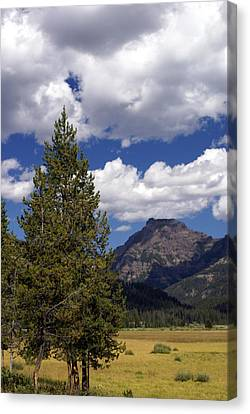 Blacktail Plateau Vertical Canvas Print by Marty Koch