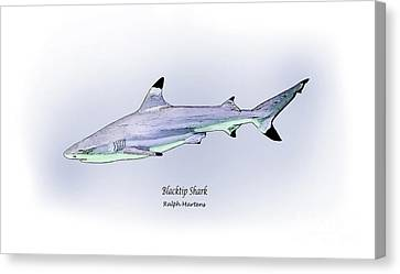 Blacktip Shark Canvas Print by Ralph Martens
