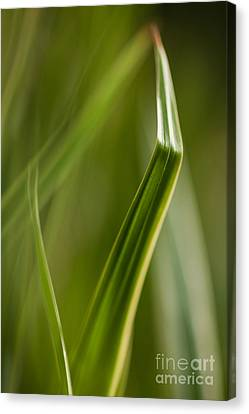 Blades Abstract 3 Canvas Print by Mike Reid