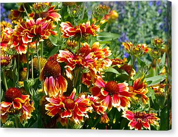 Blanket Flowers Canvas Print by Sharon Talson