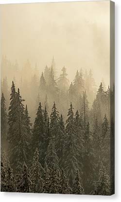 Blanket Of Back-lit Fog Canvas Print by Dustin LeFevre