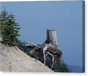Blasted Stump  Canvas Print