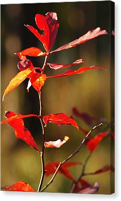 Canvas Print featuring the photograph Blazing Fire by Lori Mellen-Pagliaro