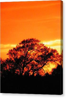 Blazing Oak Tree Canvas Print by Karen Wiles