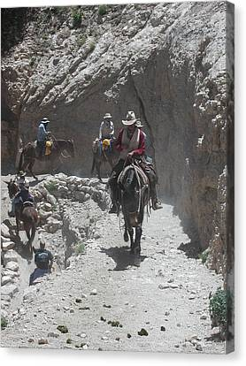 Canvas Print featuring the photograph Blazing The Trail by Nancy Taylor