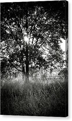 Blazing Tree Canvas Print