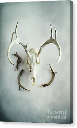 Canvas Print featuring the photograph Bleached Stag Skull by Stephanie Frey