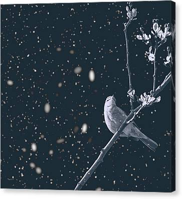 Titmouse Canvas Print - Bleak Winter by Martin Newman