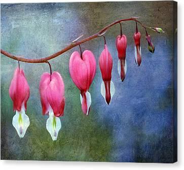 Bleeding Heart 2 Canvas Print by Marilyn Hunt