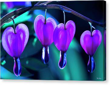 Bleeding Hearts In Moon Light Canvas Print by Skip Tribby