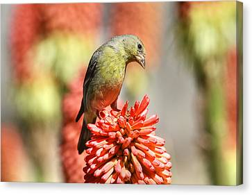 Canon 7d Canvas Print - Blending In by Donna Kennedy