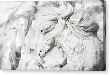Blending Into The Ice Canvas Print by Tim Booth