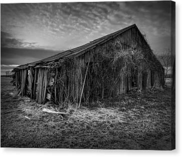 Blighted Barn 002 Bw Canvas Print by Lance Vaughn