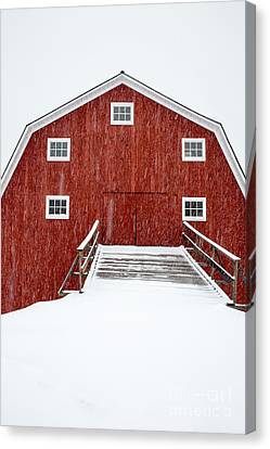 Blizzard At The Old Cow Barn Canvas Print