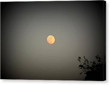 Blood Moon Canvas Print by Nature Macabre Photography