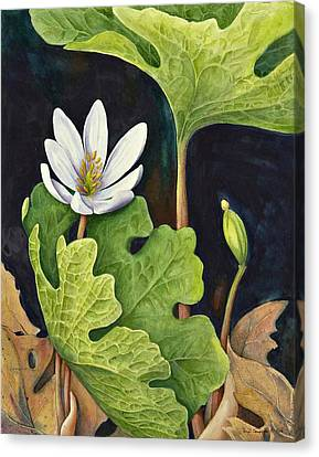 Bloodroot Canvas Print by Margit Sampogna