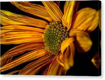 Bloom Bloom Canvas Print