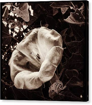 Bloom In Sepia Canvas Print