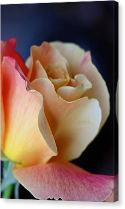Bloom Canvas Print by KC Moffatt
